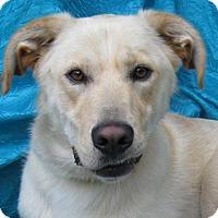 Adopt A Pet :: Scott Scott - Cuba, NY