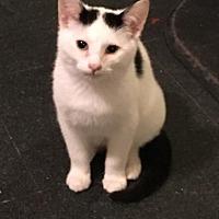 Adopt A Pet :: Jerry - East Brunswick, NJ