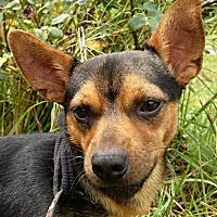 Adopt A Pet :: Mikey - Rutherfordton, NC