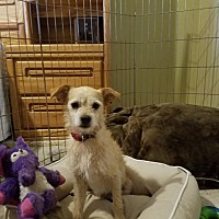Adopt A Pet :: Rocket Man - Plant City, FL