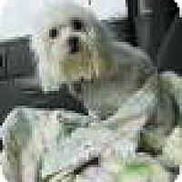 Adopt A Pet :: Romeo - Shawnee Mission, KS