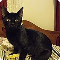 Adopt A Pet :: Nancy - Xenia, OH
