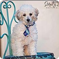 Adopt A Pet :: Rollie - Hilliard, OH