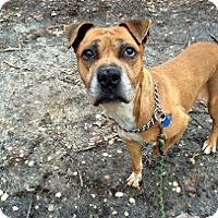 Adopt A Pet :: Cora - Tinton Falls, NJ