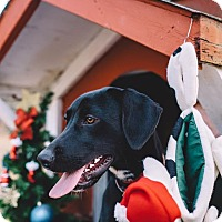 Adopt A Pet :: Palmer - Gadsden, AL
