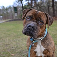 Adopt A Pet :: Wesson - Brookhaven, NY