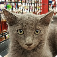 Adopt A Pet :: Fabio - San Fernando Valley, CA