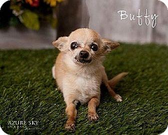 Chihuahua Mix Dog for adoption in Mesa, Arizona - Buffy
