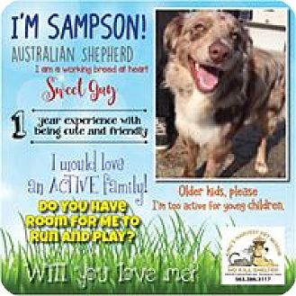Australian Shepherd Mix Dog for adoption in Davenport, Iowa - Sampson