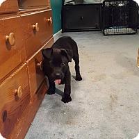 Adopt A Pet :: Zeus - Winchester, VA
