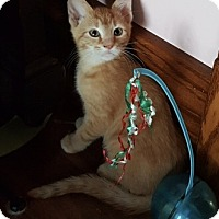 Adopt A Pet :: Chase - Warren, OH