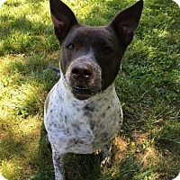 Adopt A Pet :: Bluebell - Front Royal, VA