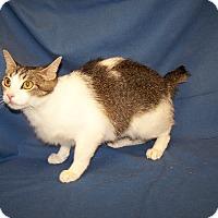 Adopt A Pet :: Jenny - Colorado Springs, CO