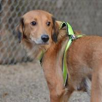 Adopt A Pet :: Tranquility - Madison, WI