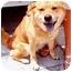 Photo 3 - Shiba Inu/Chow Chow Mix Dog for adoption in New York, New York - Aphrodite