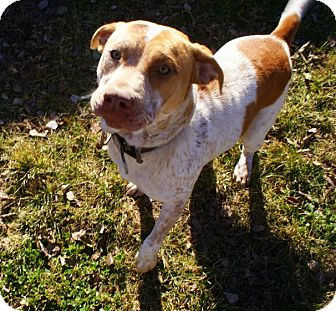 Australian Cattle Dog Mix Dog for adoption in Yuba City, California - *12/31 Addy