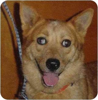 Australian Cattle Dog Mix Dog for adoption in Henrietta, Texas - Fuzzy