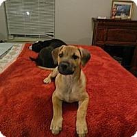 Adopt A Pet :: Gabe - Bulverde, TX