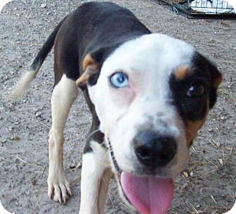 Beagle/Terrier (Unknown Type, Medium) Mix Dog for adoption in Von Ormy, Texas - Ava