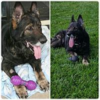 Adopt A Pet :: Lobo - Fallbrook, CA
