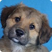 Adopt A Pet :: Holt - Minneapolis, MN