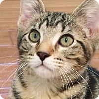 Adopt A Pet :: Zoe - Irvine, CA