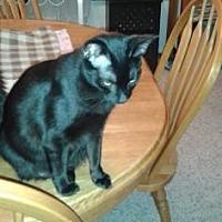 Adopt A Pet :: Sarah - Santa Fe, TX