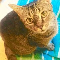 Adopt A Pet :: Montie - Asheboro, NC