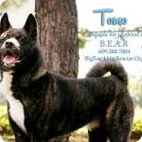 Adopt A Pet :: Tomo - Toms River, NJ
