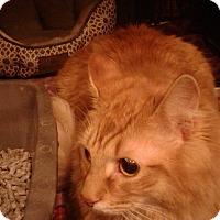 Adopt A Pet :: Pumpkin - Stafford, VA