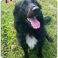 Adopt A Pet :: Trixie - Commerce, TX
