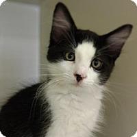Adopt A Pet :: Tyrion - New Bern, NC