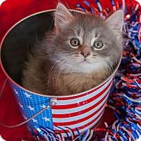 Adopt A Pet :: Cadbury - Muskegon, MI