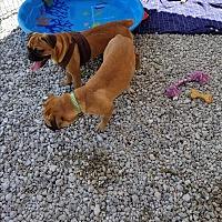 Adopt A Pet :: Lucky - Palm Bay, FL