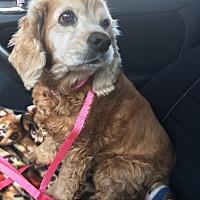 Adopt A Pet :: Lucy - Santa Barbara, CA