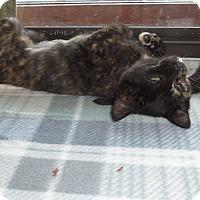 Adopt A Pet :: OPAL - Medford, WI