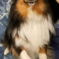Adopt A Pet :: Lacy - Kansas city, MO