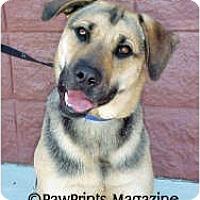 Adopt A Pet :: LOLA - Wilmington, NC