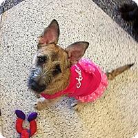Adopt A Pet :: Mollie - Oceanside, CA