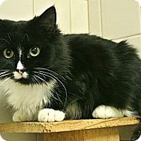 Adopt A Pet :: Sage - white settlment, TX