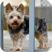 Adopt A Pet :: Fozzie - Indianapolis, IN