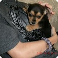 Adopt A Pet :: Puppy - Charlotte, NC