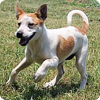Adopt A Pet :: Judge--Reduced fee $300 - Foster, RI