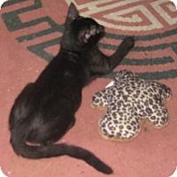 Adopt A Pet :: Charlie - Dallas, TX
