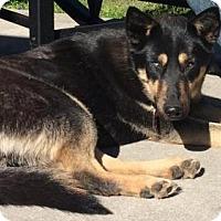 Adopt A Pet :: MILEY - Wilmington, NC