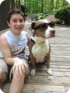 American Staffordshire Terrier/American Pit Bull Terrier Mix Dog for adoption in Kimberton, Pennsylvania - AVA