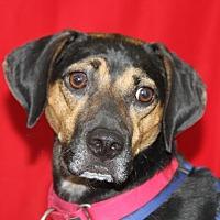 Adopt A Pet :: Duke - Wayne, NJ