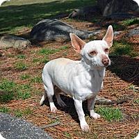 Adopt A Pet :: Mack - Mountain Center, CA