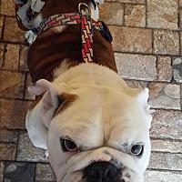 Adopt A Pet :: Baxter - Santa Ana, CA