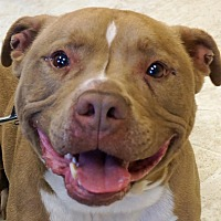 Adopt A Pet :: Brutus - Sprakers, NY
